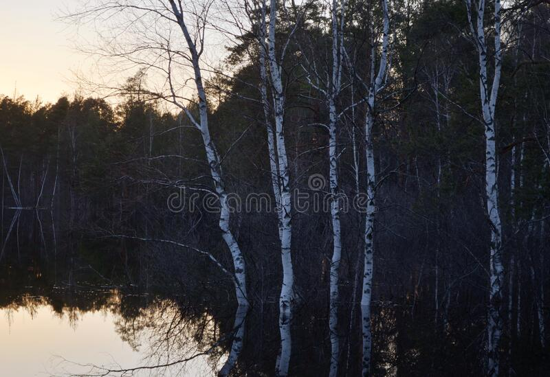 River flood in spring by sunset royalty free stock images