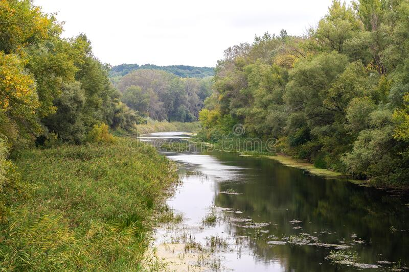 River flowing in the forest.  royalty free stock photo