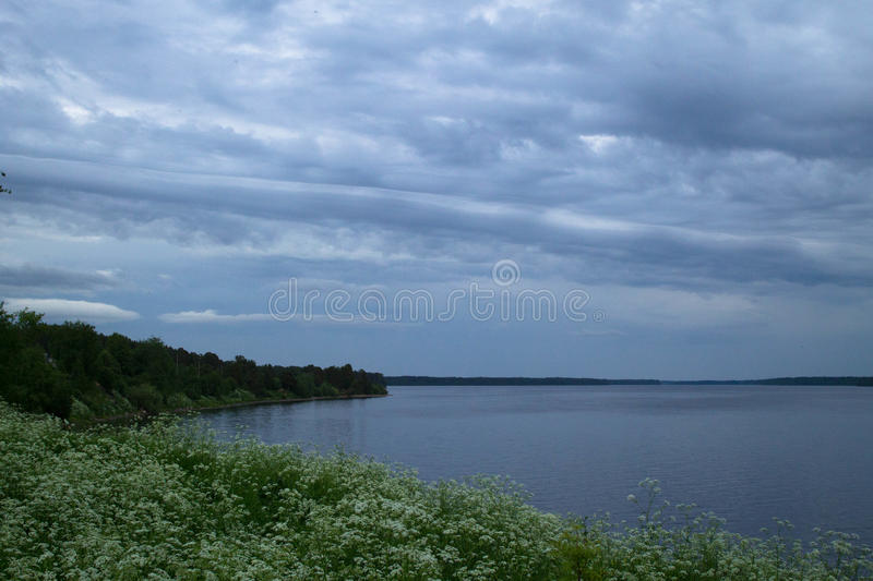 The river flowing among the greenery, flowers and forest stock photo