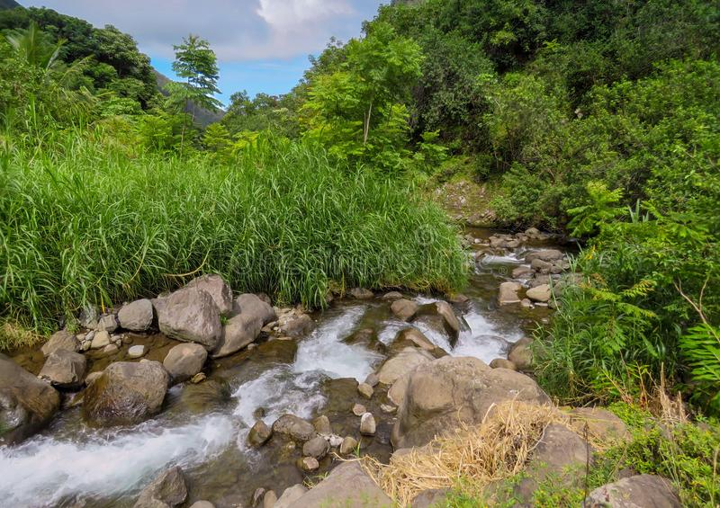 River stream flowing on rocks through green forest, Iao Valley State Park, Hawaii. River flowing on a rocky river bed through the green bushes of Iao Valley royalty free stock images