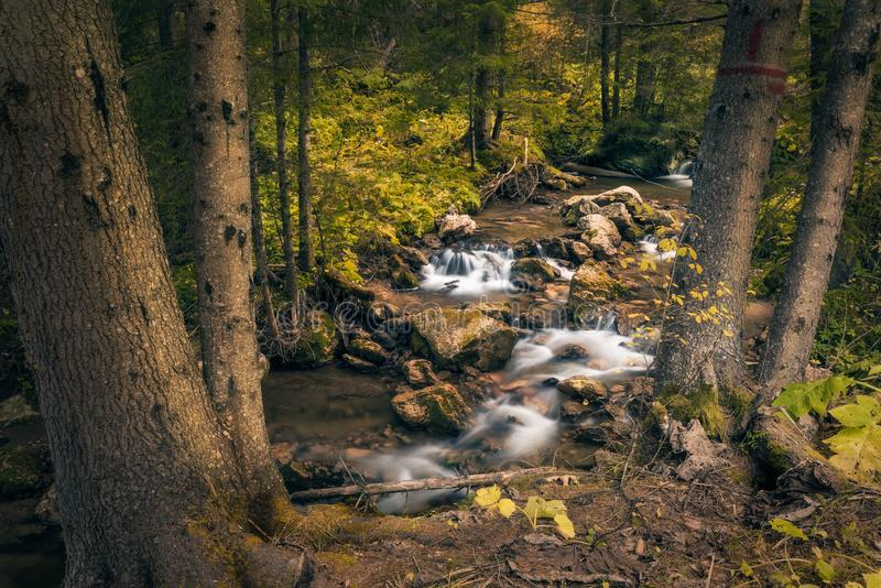 River flowing through some rocks framed by some trees in a autumn forest scene royalty free stock image