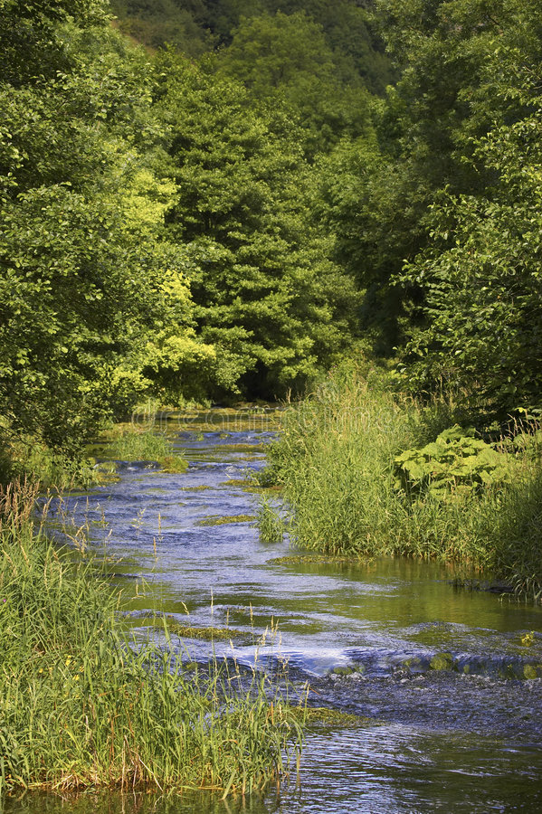 River flowing through tree lined route. In england royalty free stock images