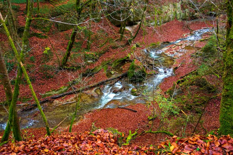 The river flows in a beautiful autumn forest royalty free stock photos