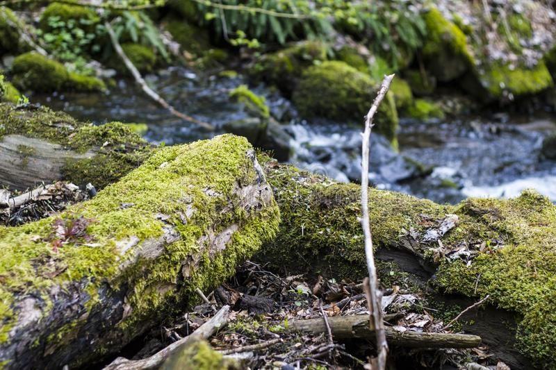 River flows fast through a mossy forest royalty free stock images