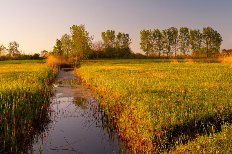 Download River That Flows Through The Swamp Stock Photo - Image: 24623904