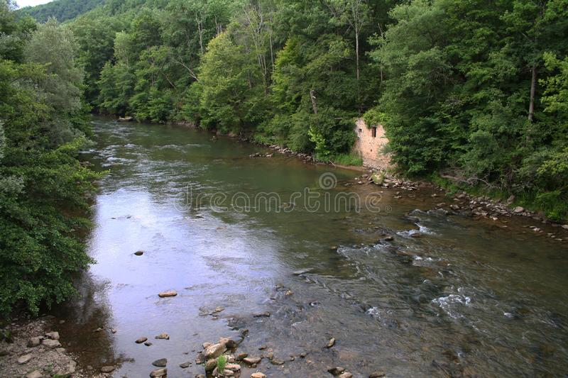 River in a forest royalty free stock photography