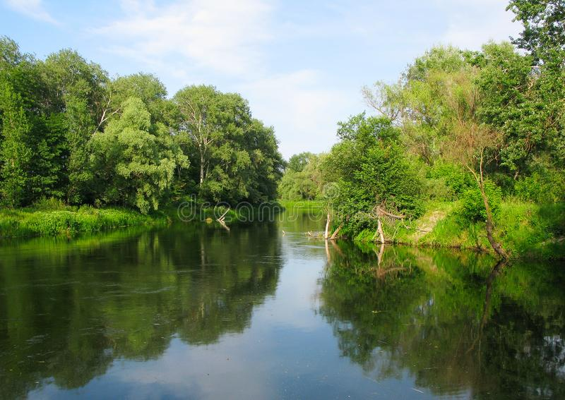 River and forest royalty free stock photography