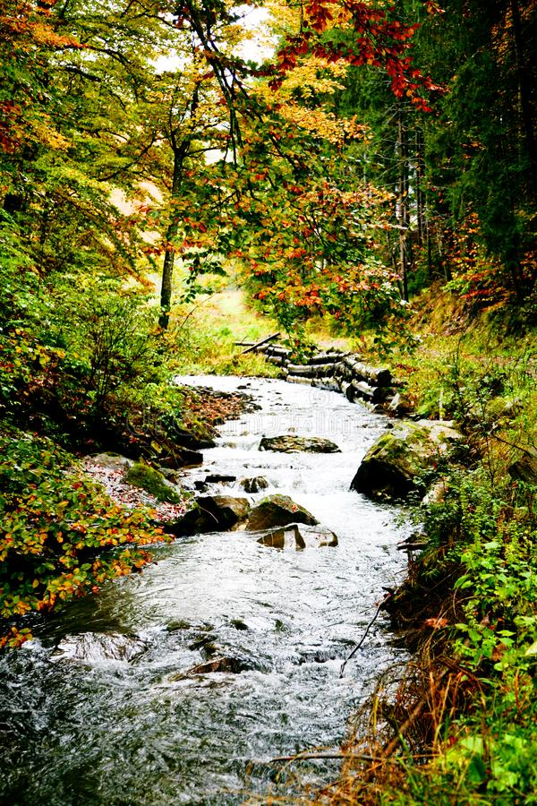 River in forest stock photo