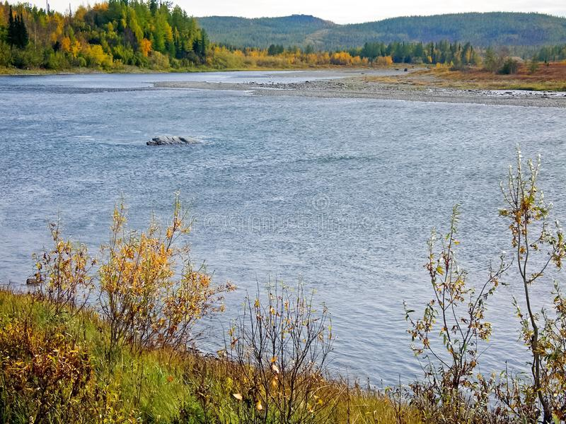 River and . Autumn landscape on the Yamal Peninsula under. River and forest. Autumn landscape on the Yamal Peninsula under Salekhard. Autumn forest. The leaves stock photo