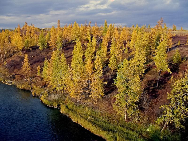 River and forest. Autumn  on the Yamal Peninsula under. River and forest. Autumn landscape on the Yamal Peninsula under Salekhard. Autumn forest. The leaves of stock image