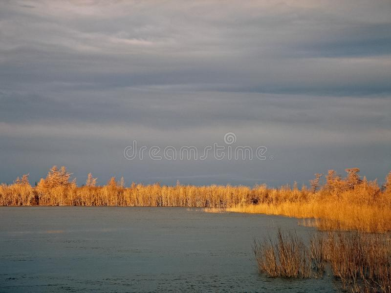 River and forest. Autumn landscape on the Yamal Peninsula under. Salekhard. Autumn forest. The leaves of the grass and the trees turned yellow and turned red royalty free stock photos