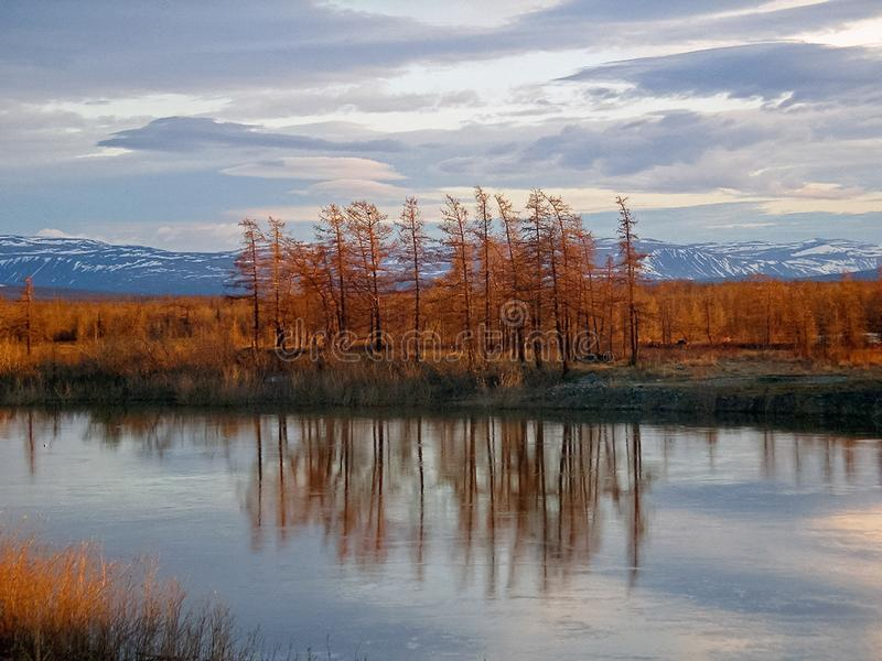 River and forest. Autumn landscape on the Yamal Peninsula under. Salekhard. Autumn forest. The leaves of the grass and the trees turned yellow and turned red royalty free stock photo