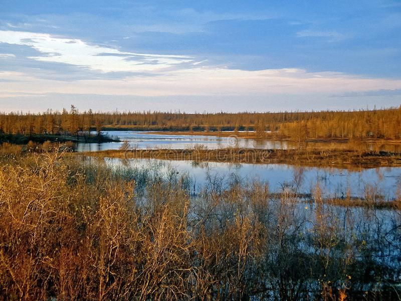River and forest. Autumn landscape on the Yamal Peninsula under. Salekhard. Autumn forest. The leaves of the grass and the trees turned yellow and turned red stock images