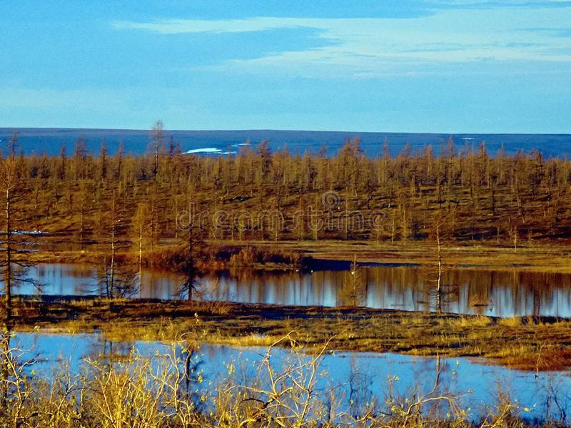 River and forest. Autumn landscape on the Yamal Peninsula under. Salekhard. Autumn forest. The leaves of the grass and the trees turned yellow and turned red stock photography