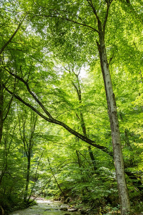 River in Sun Forest Sunny Green Tree Branches Summer Backdrop stock images
