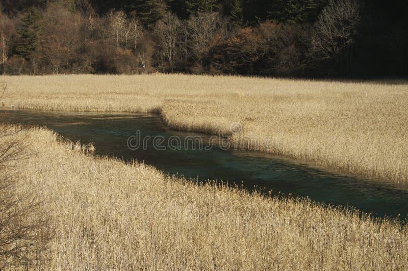 River go through the reeds stock photo