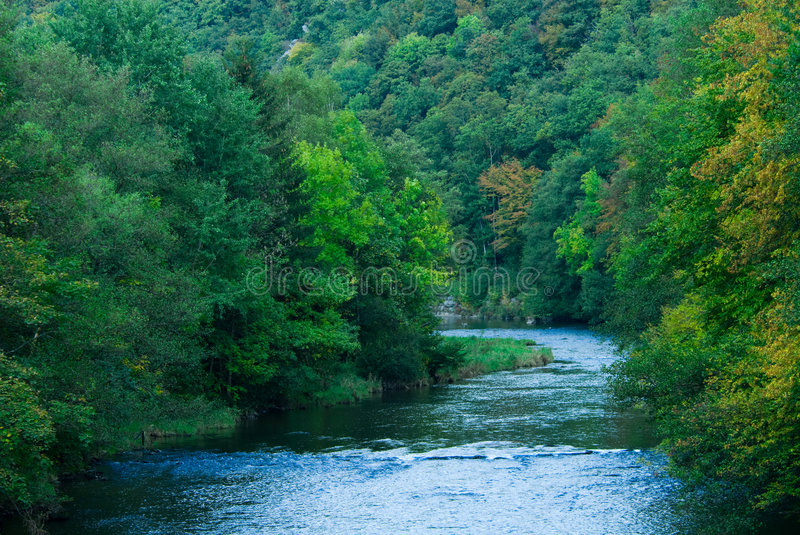 River and green forest royalty free stock image