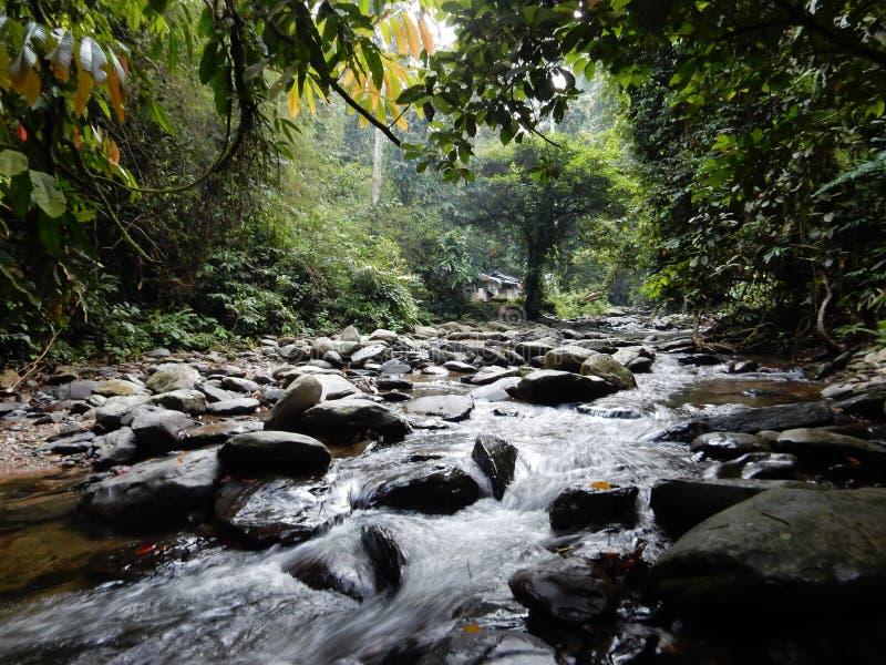 A river in green jungle of Sumatra stock photo