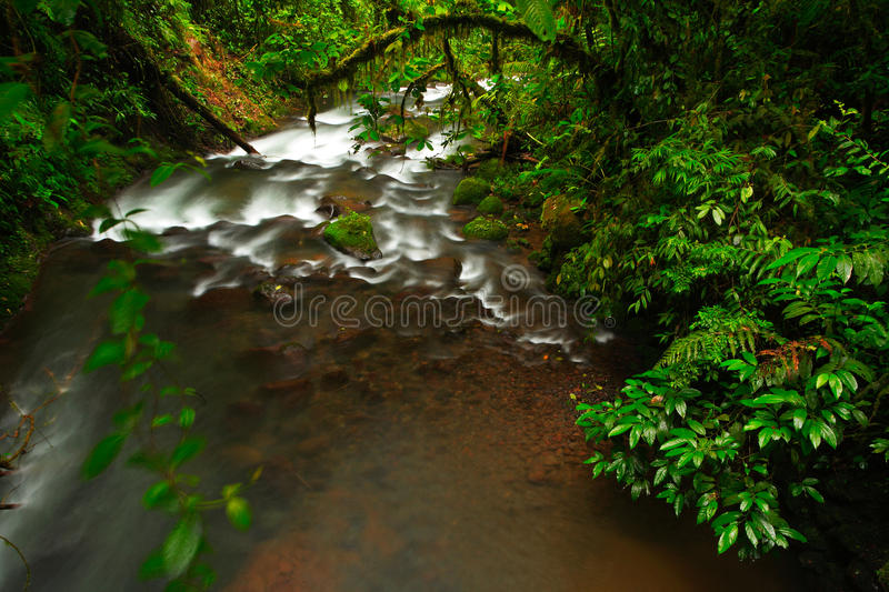 River in green tropic forest. La Paz Waterfall gardens, with green tropical forest in Costa Rica. Mountain tropic forest with rive. R stock photos