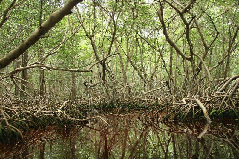The river habitat at Celestun, Mexico royalty free stock photo