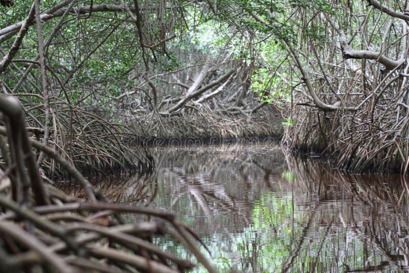 The river habitat at Celestun, Mexico stock photography
