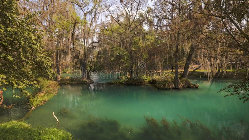 River at Huasteca Potosina, Mexico royalty free stock photography