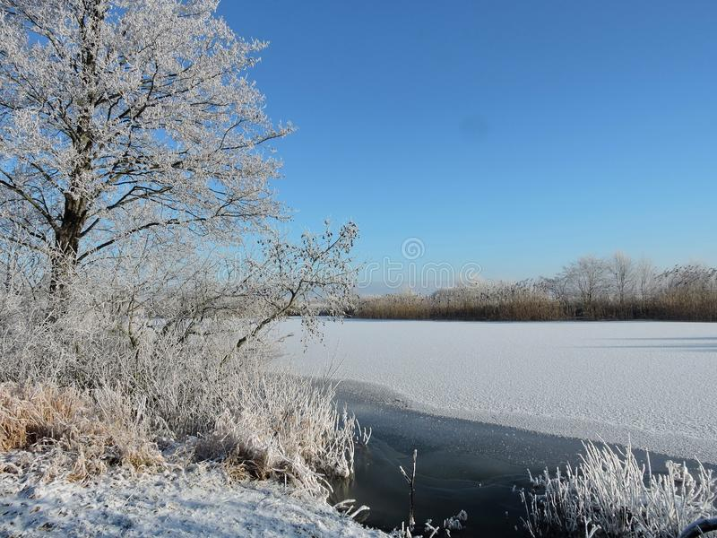 River Sysa and snowy trees, Lithuania royalty free stock photos