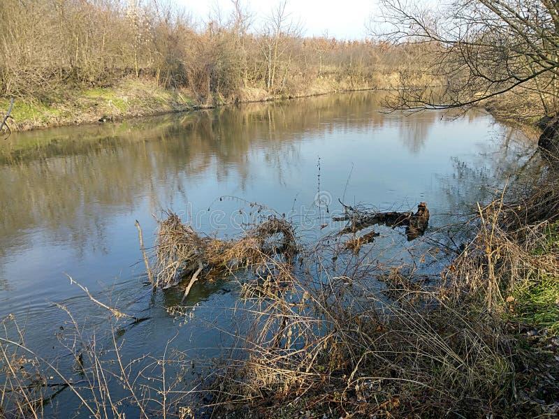 River Jihlava, Czech republic,Europe. Landscape and river Jihlava, Czech republic, Europe stock photography