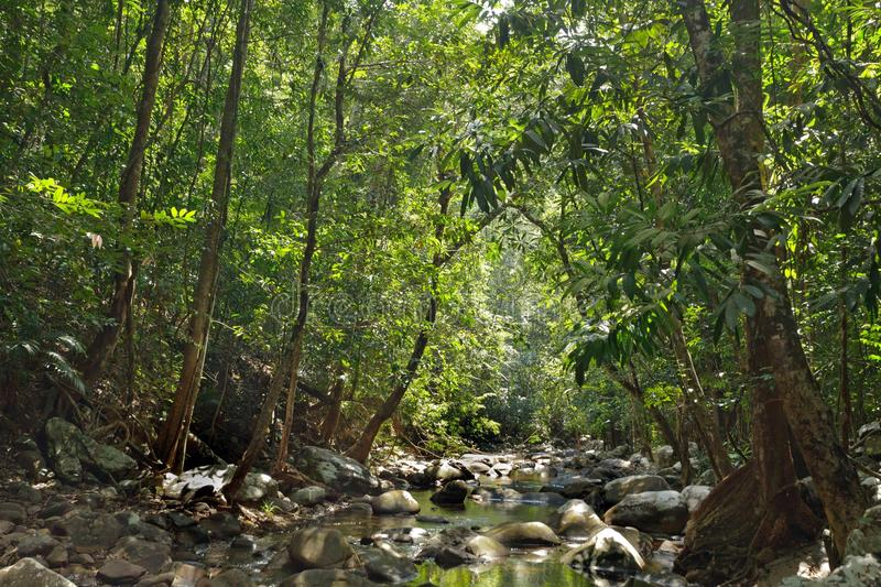 Download River in jungle stock photo. Image of island, foliage - 23990660