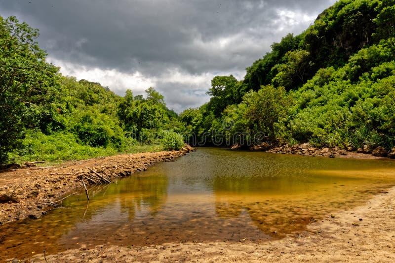 River in jungle, Jimbaran, Bali stock photos