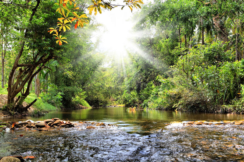 River in jungle, Thailand. River in jungle, Phuket, Thailand royalty free stock photo