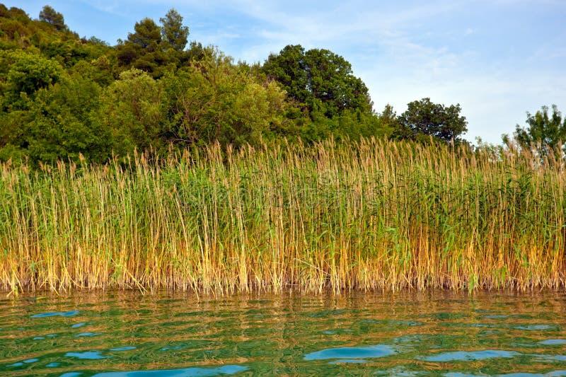River Krka stock image