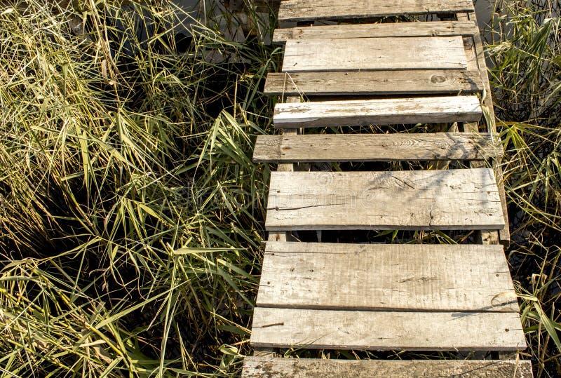 River landscape, fishing spot, pier. River landscape, fishing spot, forest stock photography