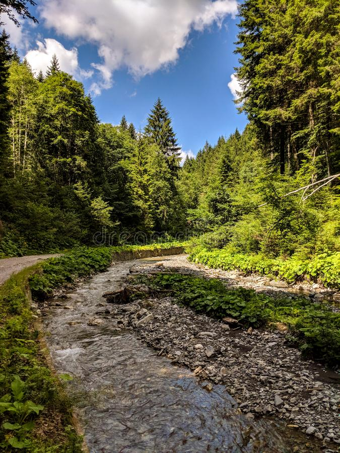 River landscape among green trees stock images