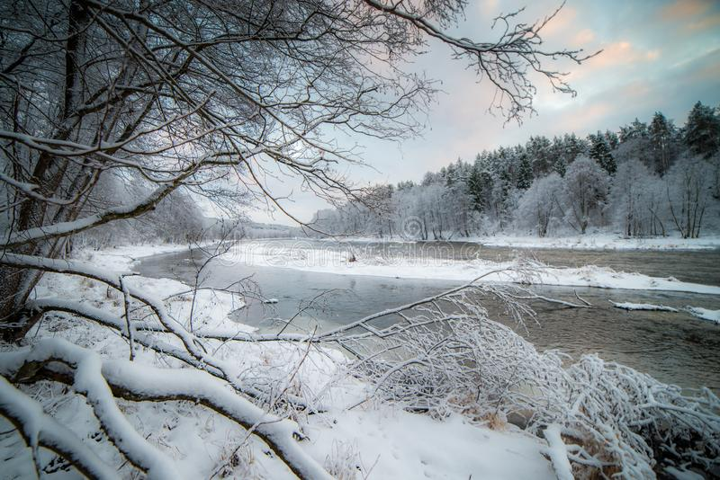 River landscape in snowy forest. River flowing in snowy forest of white Lithuanian winter