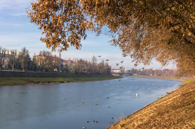 Birds over the river. River landscape in spring or autumn. The bend of a shallow river. Trees on the bank along the river. Picturesque autumn landscape. Stream royalty free stock photo