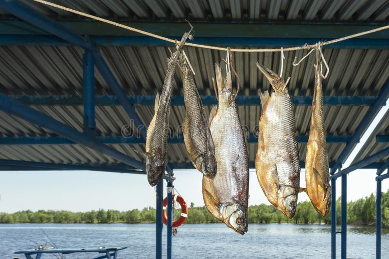 River large fish ide I dry in the shade on the rope. royalty free stock photo