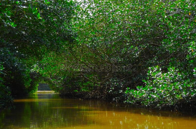 River and Mangroove in Yucatan stock photography