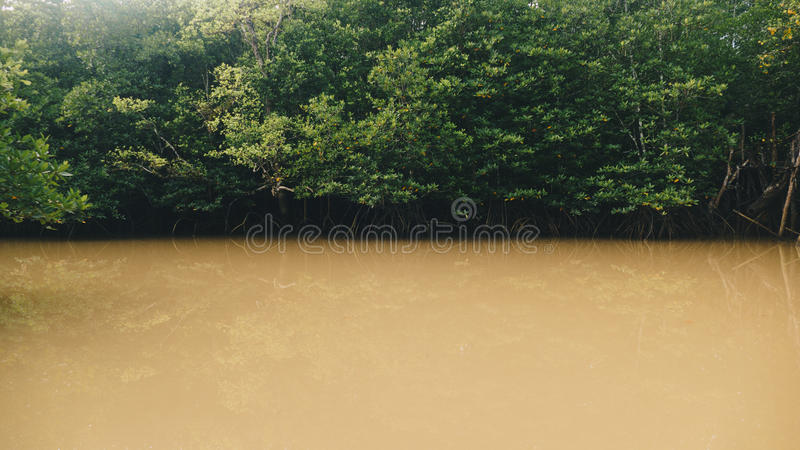 River with mangrove fores. In south of Thailand royalty free stock photo