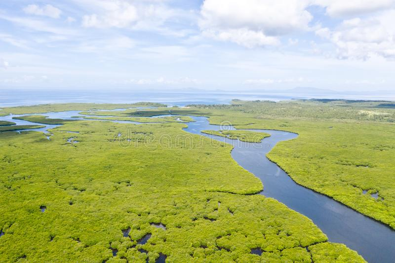 River in the mangroves, top view. Tropical landscape with mangrove forest and rivers royalty free stock photos