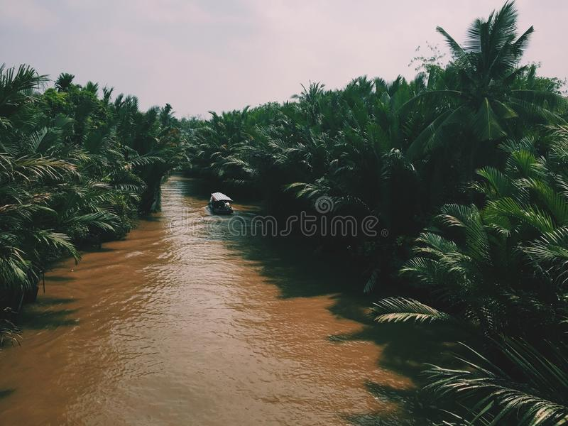 River In The Middle Of A Forest stock photo