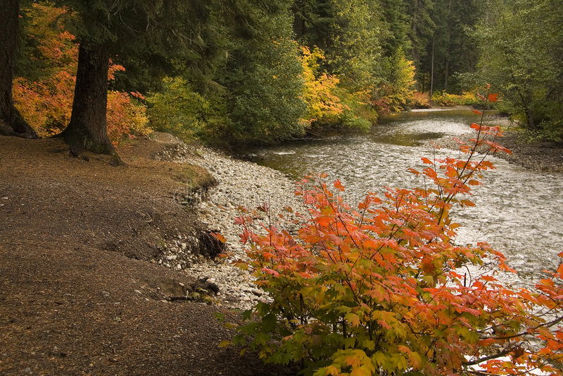 River nature scene royalty free stock photos