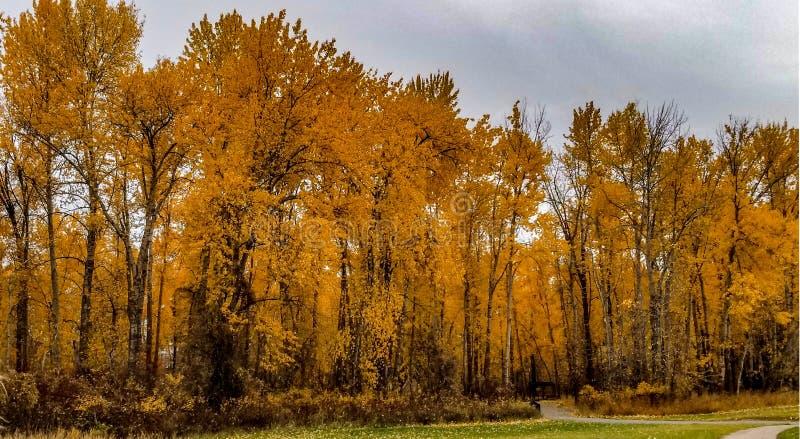 River park - hamilton ,mt 10/17/17 royalty free stock photography