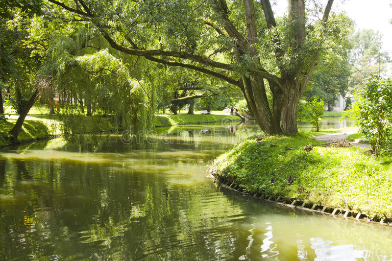 River in park during summer. Park scene with tree along river bank stock image