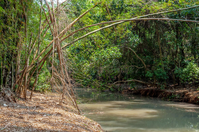 River passing between bamboo grovesRiver passing between bamboo groves stock photo