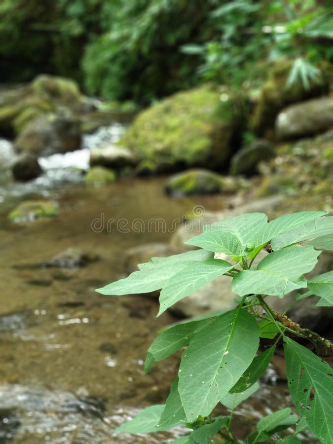 River Plant, Nature. River plant at Srambang Forest is a forest in Ngawi, Indonesia stock images