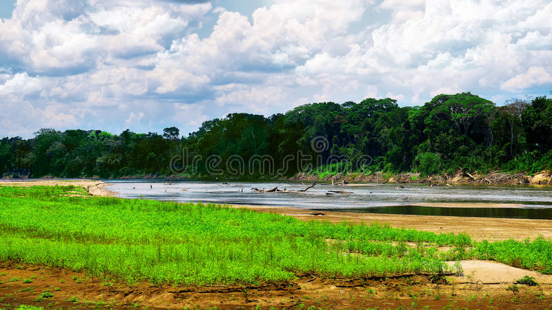 River in rainforest stock photography