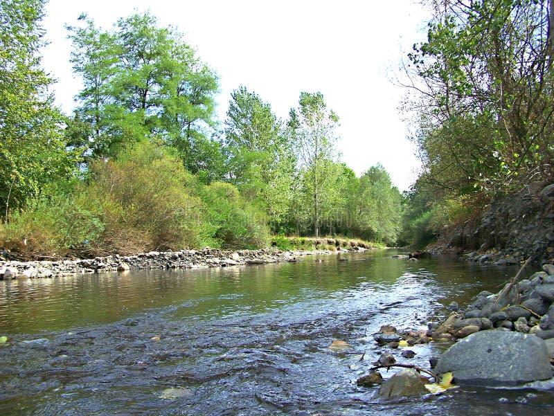 River Rasina. In Zupa Serbia stock images
