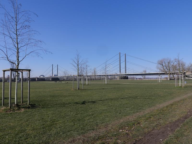 River Rhein Park, view to Theodor Heuss Bridge, Düsseldorf Germany, Young trees tied up stock images