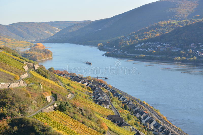 River rhine with golden leaves. Lorch, Germany - October 31, 2016 - Golden grape leaves from wineyard in sun above river rhine stock photography